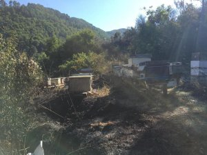 Kastamonu'da orman yangını