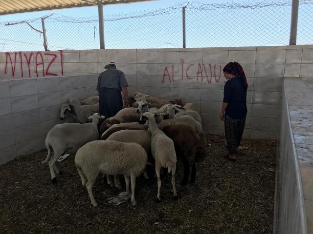 Ereğli'de yakalanan hayvan hırsızları tutuklandı