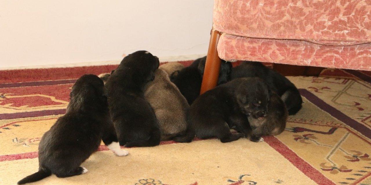 Toprak yığınları arasında mahsur kalan 9 yavru köpeği Akut ekipleri kurtardı