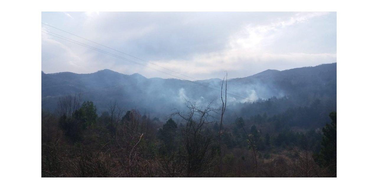 Türkeli'de orman yangını