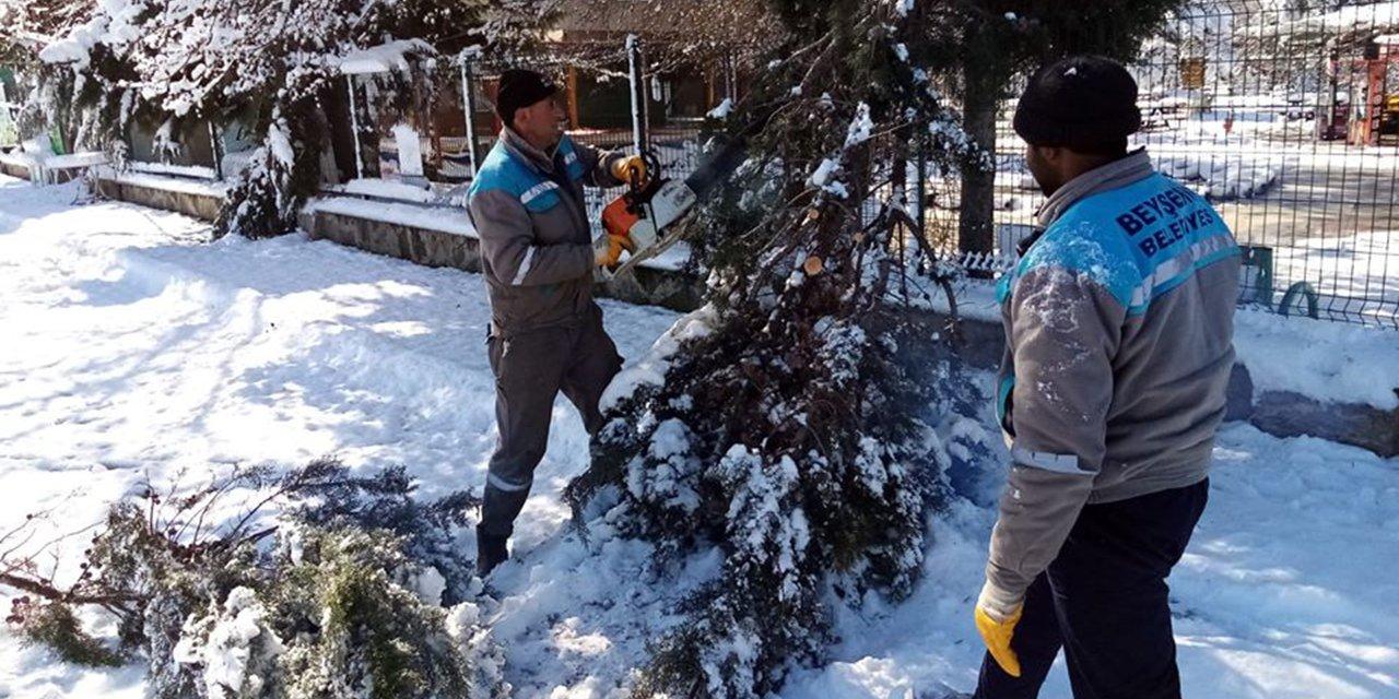 Beyşehir'de kar yağışından zarar gören ağaçlara bakım yapıldı