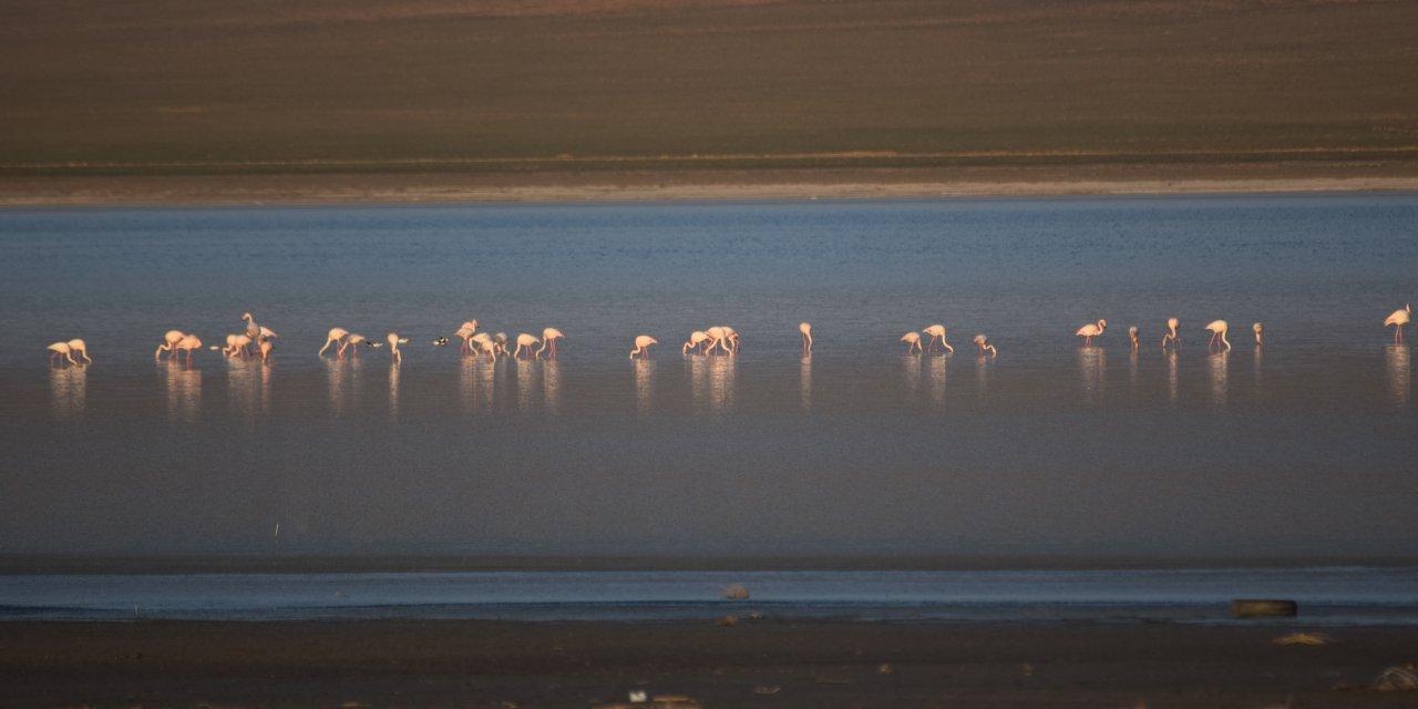 Konya Düden Gölü'nde flamingo canlılığı