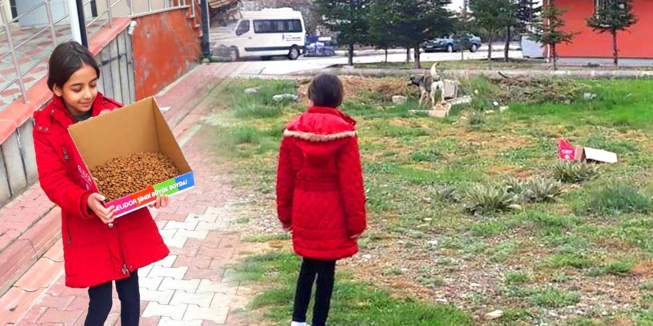 Kendi küçük yüreği büyük Şevval sokak hayvanlarını elleriyle besliyor