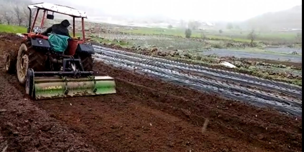 Konya'da kar yağarken çilek ekimi devam etti