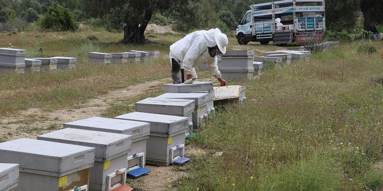 Arıların poleni neredeyse arıcılar orada