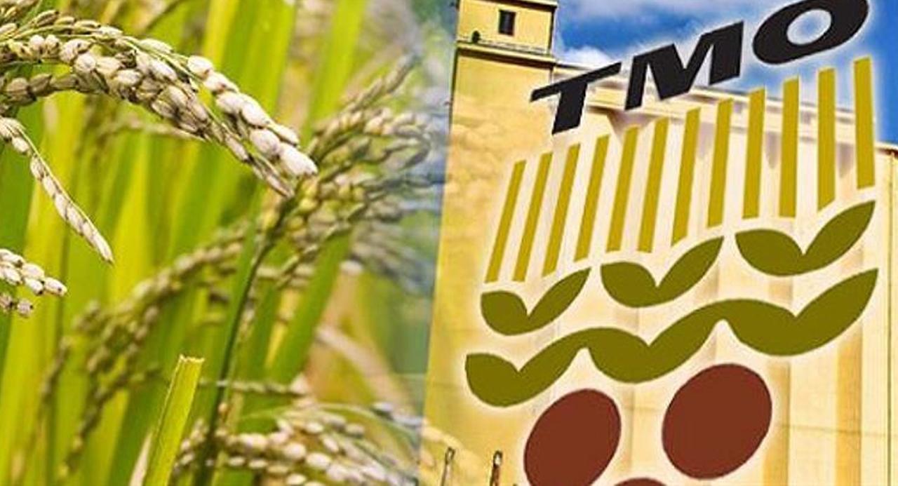 TMO 2020 hububat alım fiyatları ve şartlarını açıkladı!