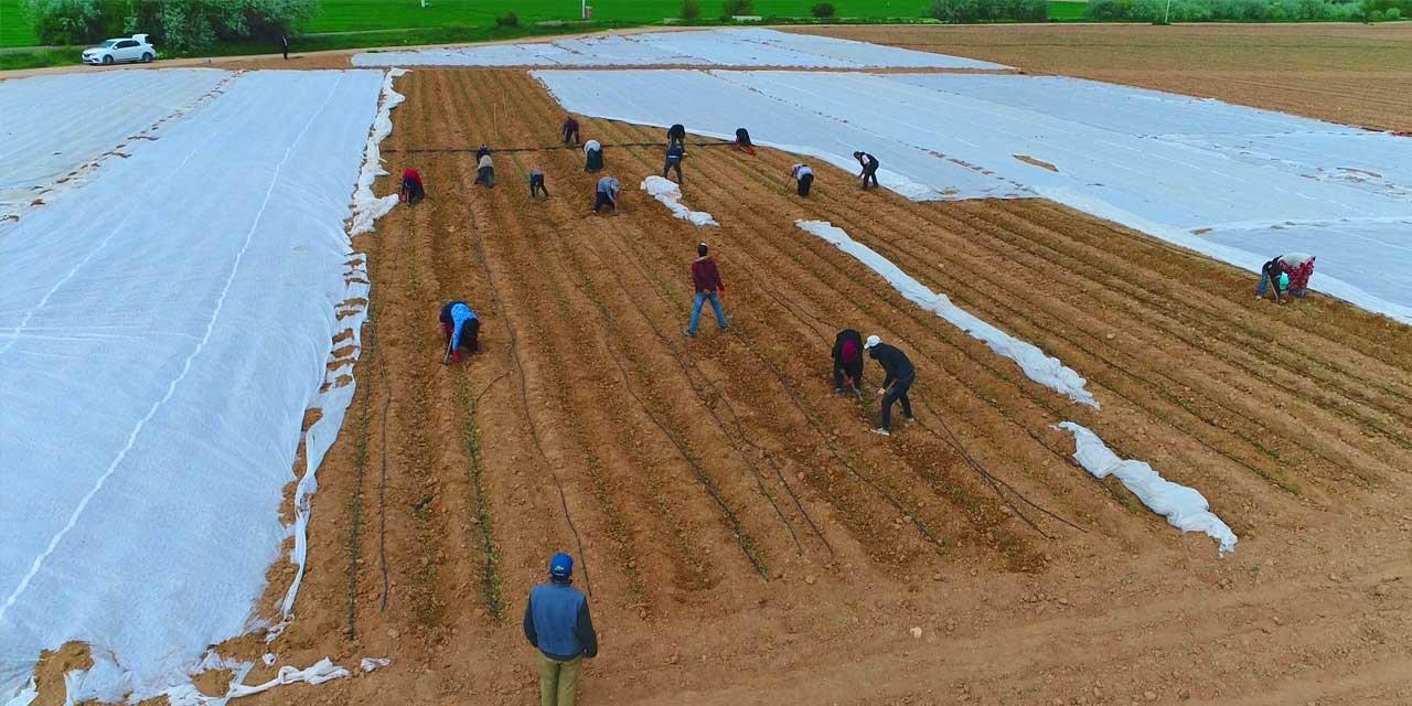 Tarım ve Hayvancılıkta başvurular 7 Temmuz'a uzatıldı