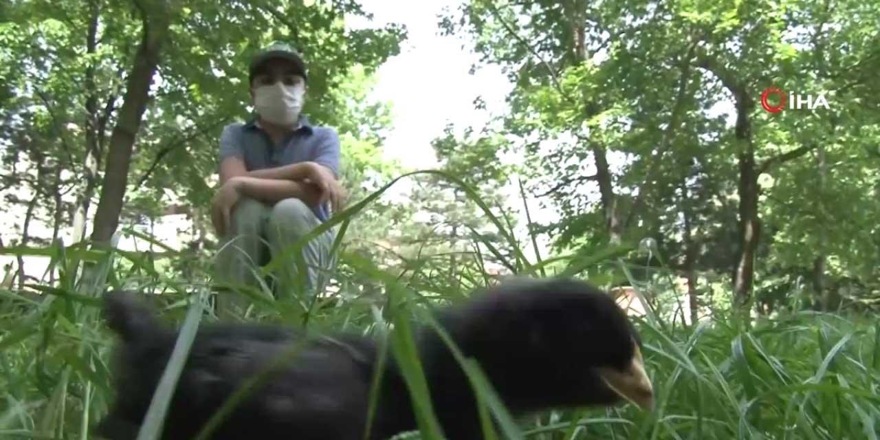 İzin Saatinde Herkes Parklara Giderken O Tüm Saatini Civcivleriyle Geçirdi