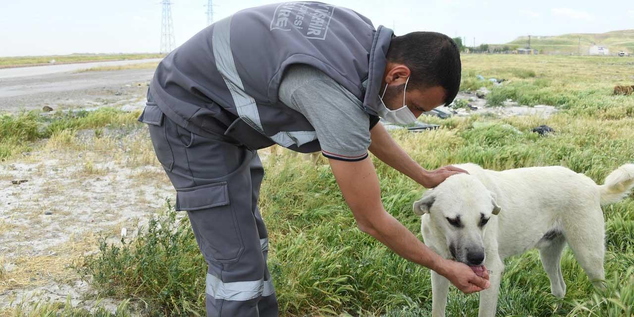 Büyükşehir Belediyesi Hayvan Dostlarımızı Unutmadı