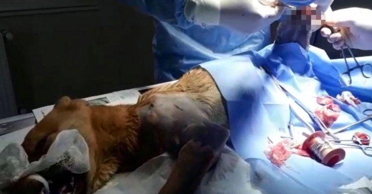 Bursa'da araba çarpan köpek ameliyat edildi