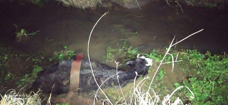 Çamura saplanan iki ineği itfaiye kurtardı