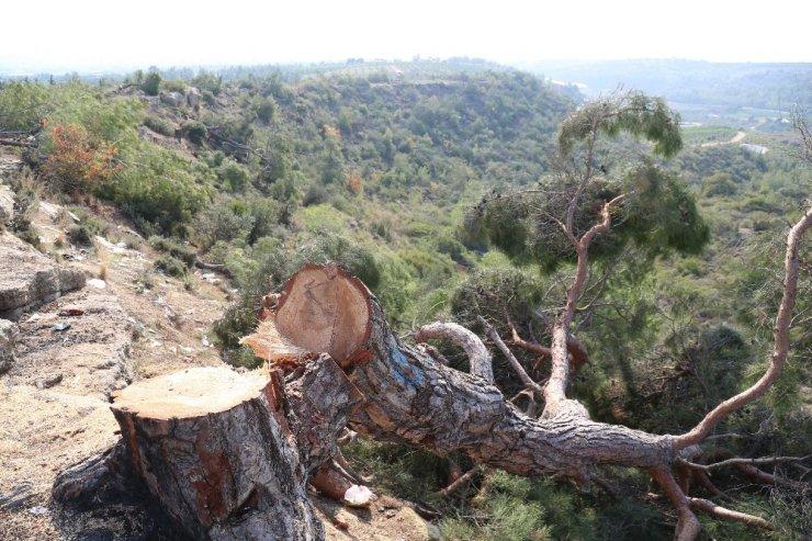 Ağaç katliamını yalnız yapmamış