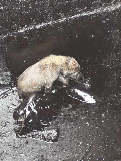 Diyarbakırlı çocuklar petrol kuyusuna düşen 2 yavru köpeği kurtardı