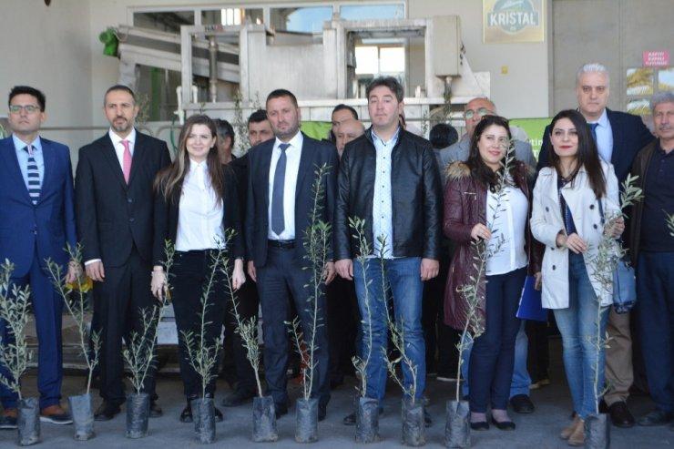 Ayvalıklı zeytin üreticisine 15 bin fidan desteği