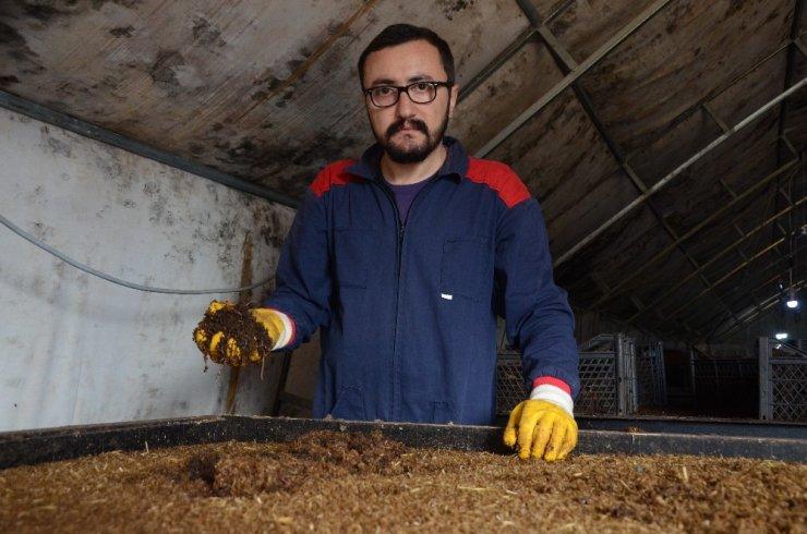 15 milyon solucan ile organik gübre üretiyor