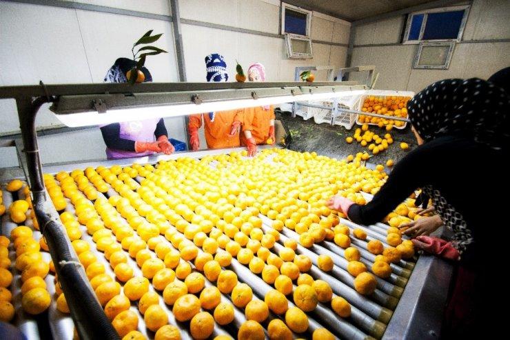 Aydın'daki 600 ihracatçının yükü hafifletilecek