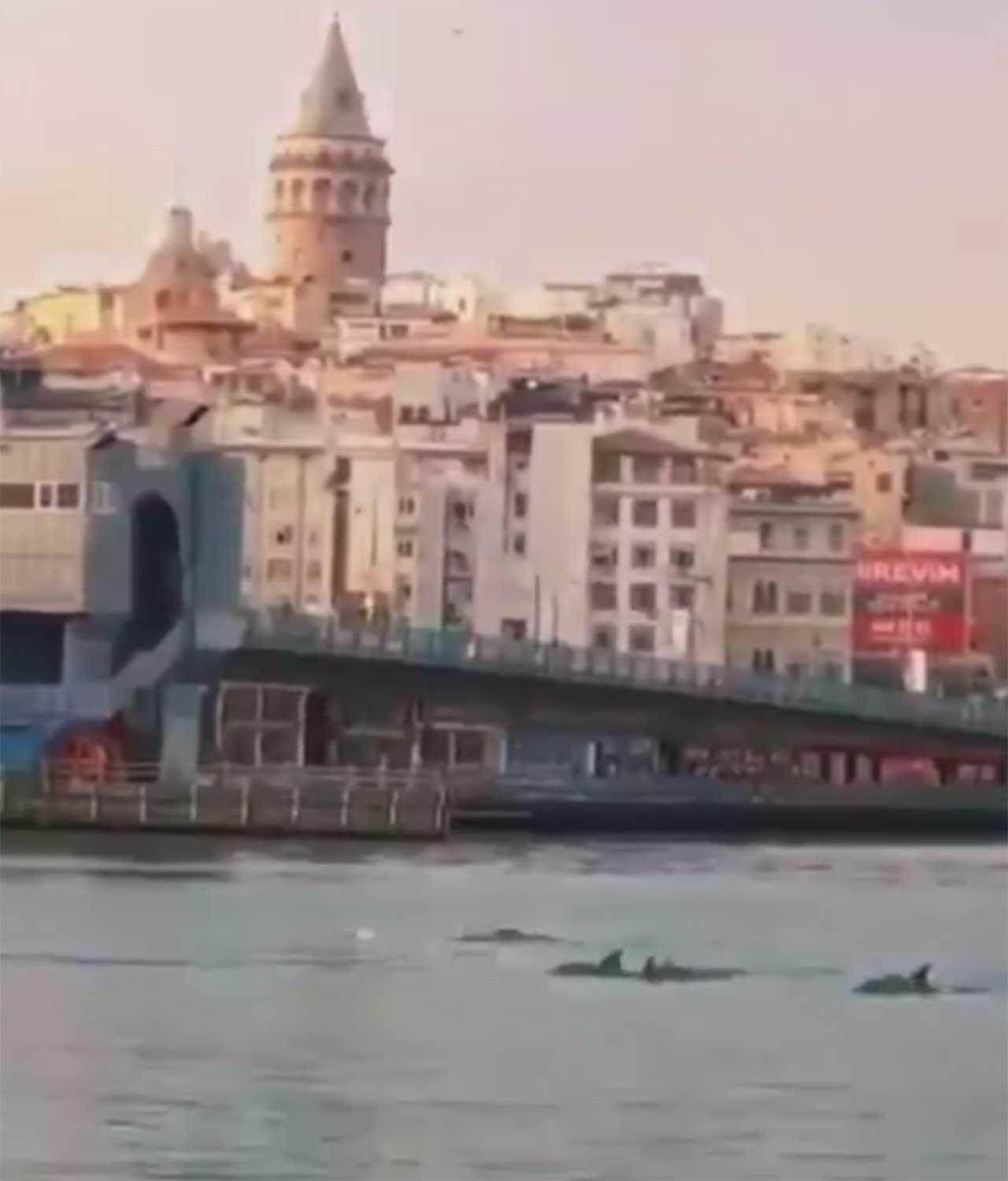 istanbul-yunuslarr.jpg
