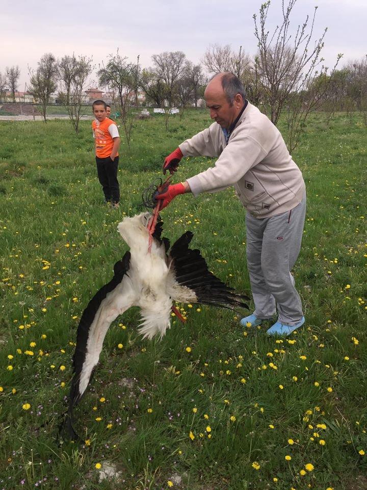 Bahçesinde yaralı leylek buldu!