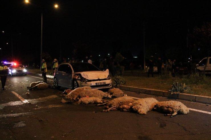 Yarış yapan araçlar koyun sürüsüne daldı! 30 koyunu telef oldu