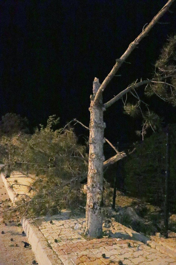 Boş yolda görünmez kaza! Takla attı, ağaca ve karşı yoldaki direğe çarptı