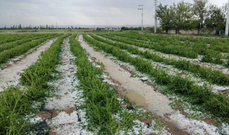 Eskişehir'de Dolu Yüzünden Tarım Alanları Zarar Gördü