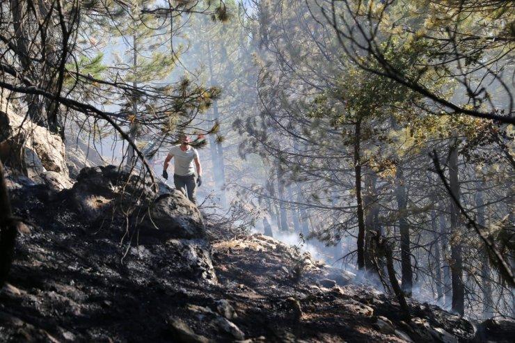 Taşkent'te orman yangını! 1 buçuk hektarlık alan zarar gördü