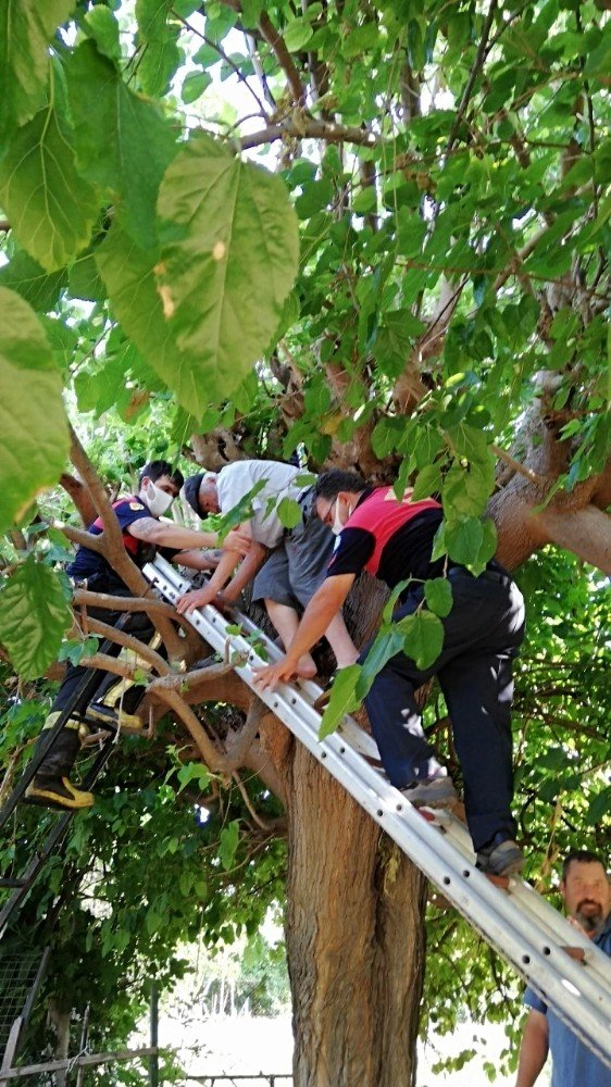 Dut ağacında sıkışıp kalan adamı itfaiye kurtardı