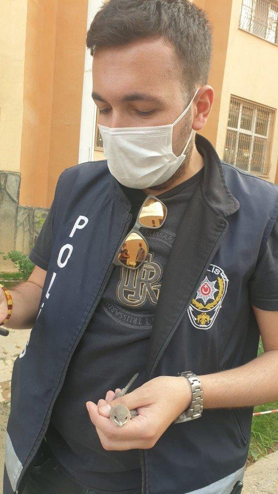 Hakkari'de yavru saka kuşunu polisler kurtardı