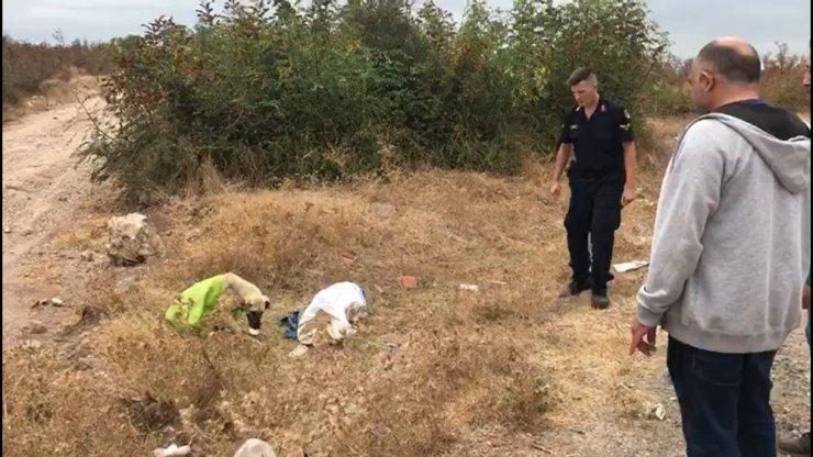 Vahşetin böylesi...Çanakkale'de, çuvala koyularak ölüme terkedilen köpeği jandarma kurtardı