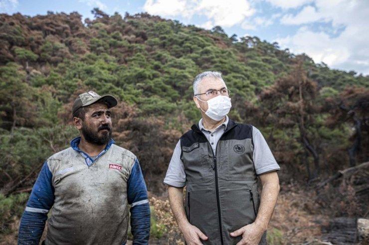 Ahmetli'deki orman yangının izleri siliniyor