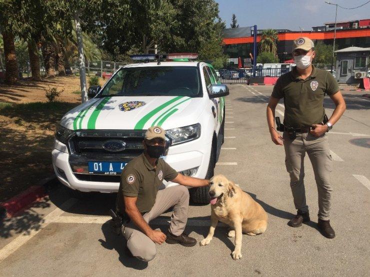 Çevre, doğa ve hayvanlar polise emanet
