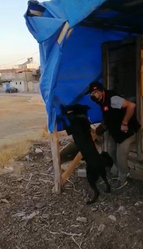 Brandaya gizlenen esrar maddesini narkotik köpeği buldu