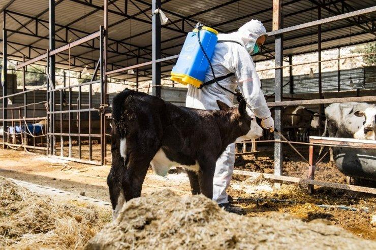 Mersin'de hayvancılık yapılan bölgeler üçgün hastalığına karşı ilaçlandı