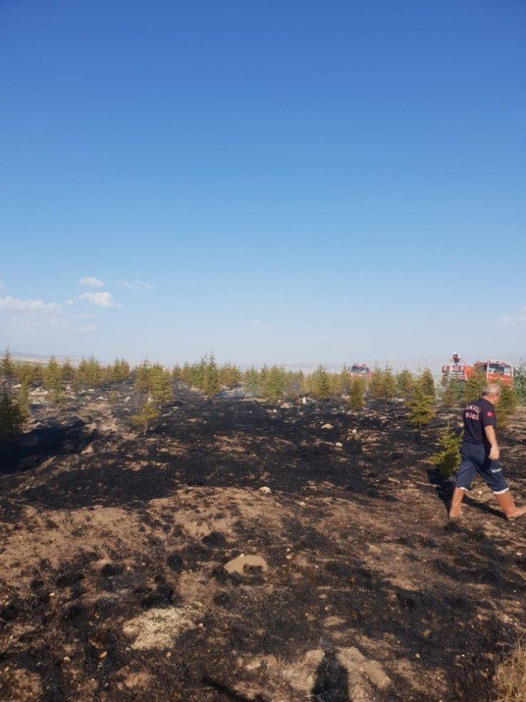 Çıkan yangında çam ağaçları zarar gördü