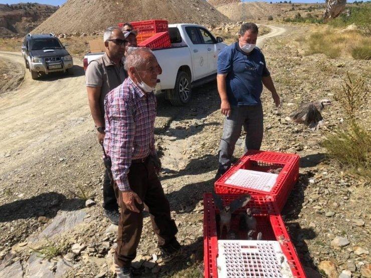 Hüyük'te doğaya 500 kınalı keklik daha salındı