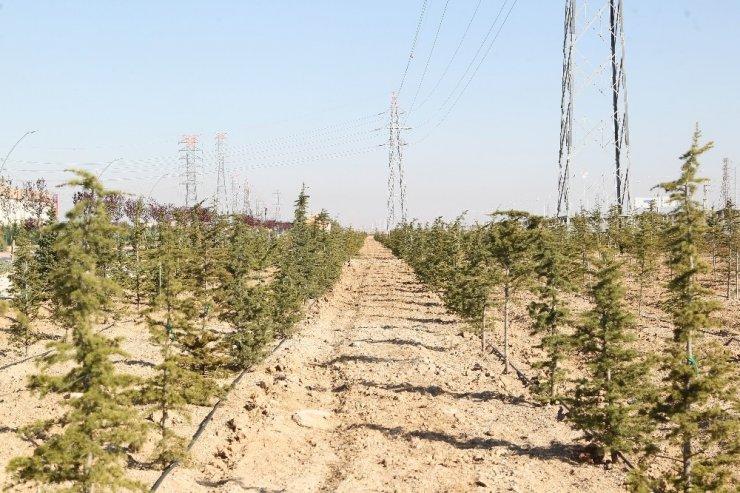 Konya'da dikilen geleceğe nefes olacak fidanlar büyüyor