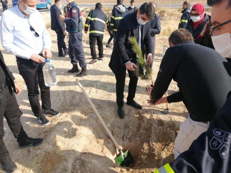 Sultanhanı ilçesinde fidanlar toprakla buluştu