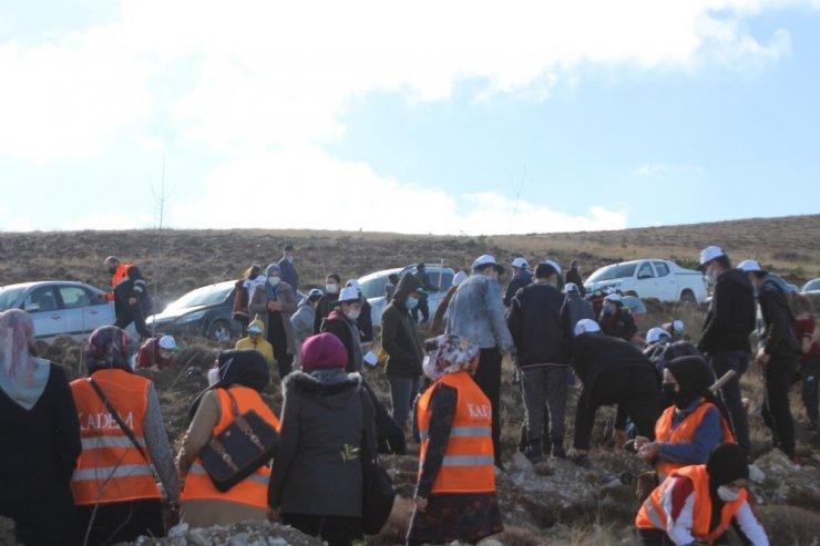 Bayburt'ta binlerce fidan toprakla buluştu