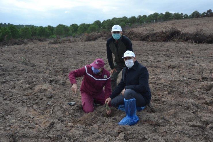 Biga'da bin 500 fidan toprakla buluştu