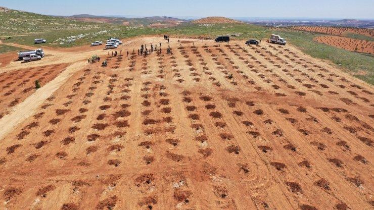 Şehitkamil'de milyonlarca metrekare yeşil alan oluşturuldu