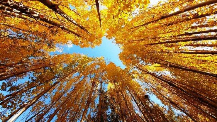 Bitlis'te sonbahar güzelliği