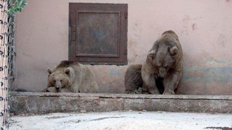 Gaziantep Hayvanat Bahçesi sakinleri kışa hazır